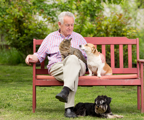 Four Health Benefits of Having A Pet Companion for Seniors